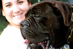 old world cane corso dream
