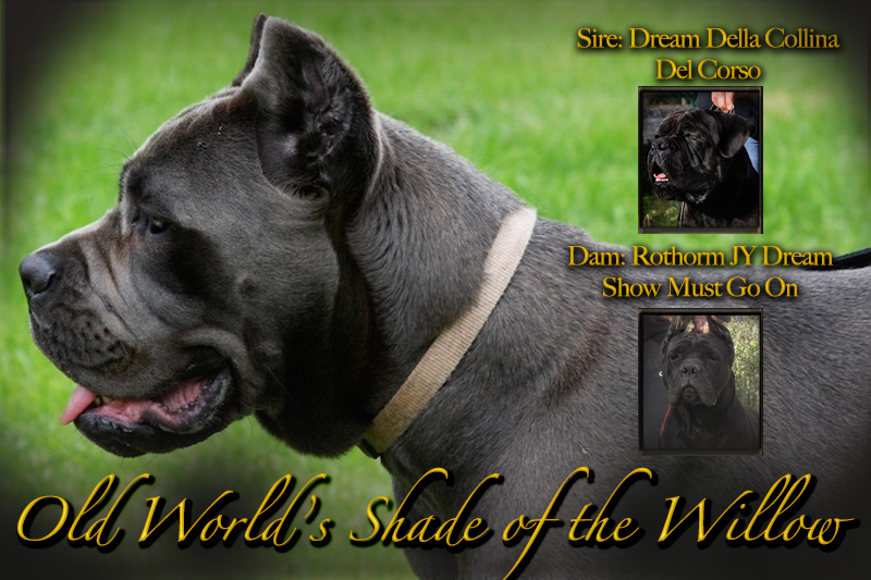 cane corso rustic willow